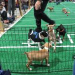 Puppy Bowl Adoption Event